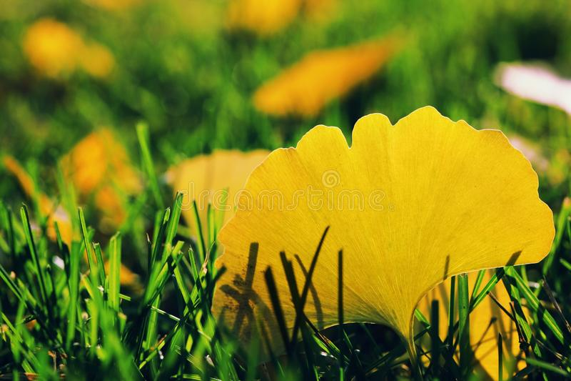 De herfst gevallen bladeren stock afbeelding
