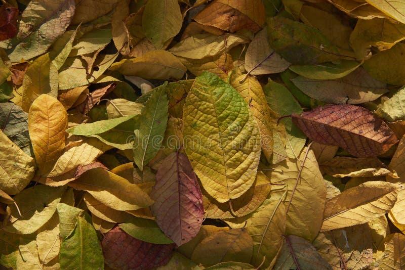 De herfst gevallen bladeren in natuurlijk zonlicht stock afbeeldingen