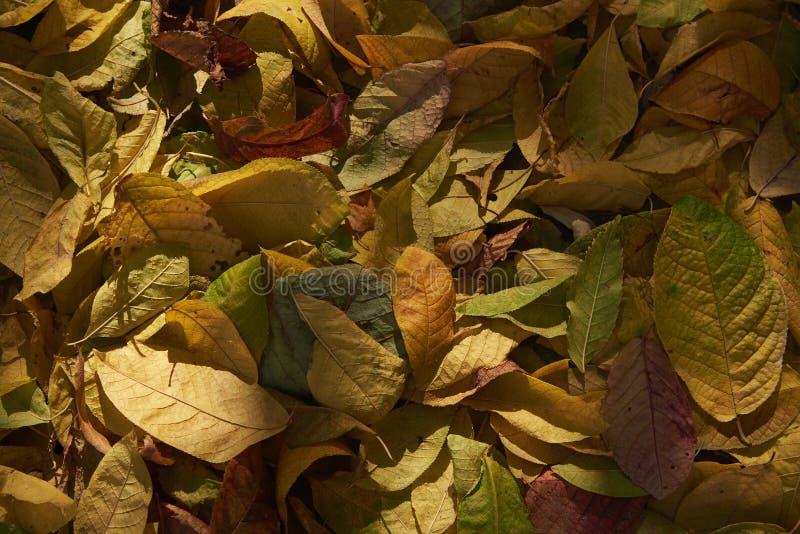 De herfst gevallen bladeren in natuurlijk zonlicht stock foto's