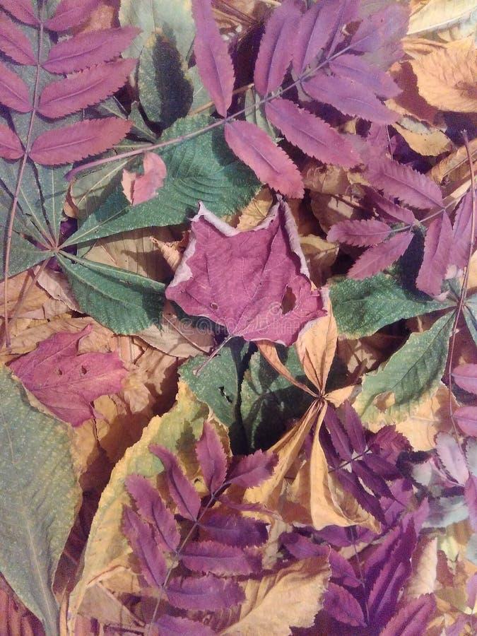 De herfst gevallen bladeren van bomen stock foto