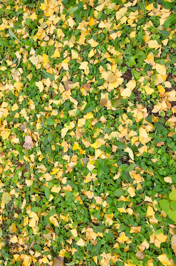 De herfst gevallen gaat ter plaatse weg royalty-vrije stock fotografie