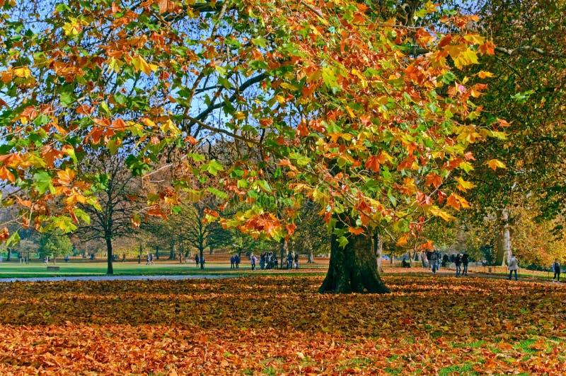 De herfst in Groen Park, Londen royalty-vrije stock foto's