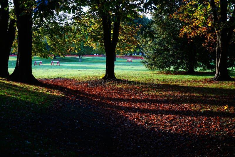 De herfst in Hagley Park, Christchurch, Nieuw Zeeland royalty-vrije stock foto's