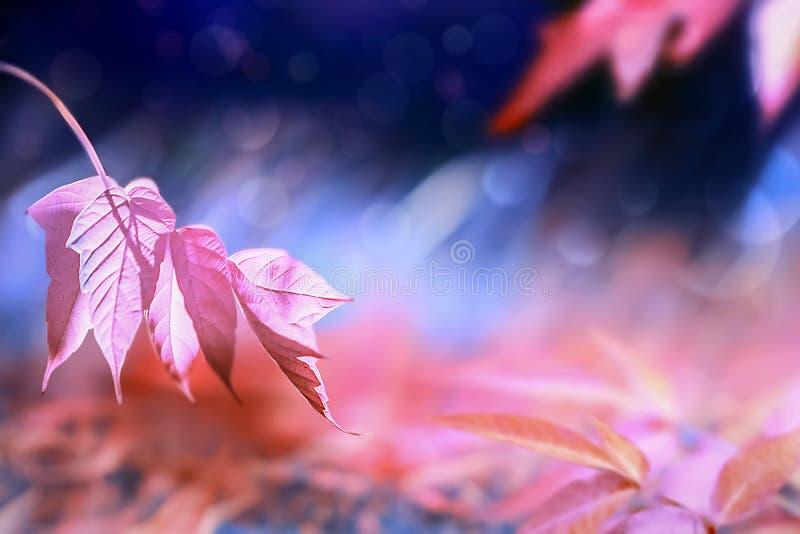 De herfst heldere fantastische natuurlijke achtergrond Roze en purpere bladeren in het de herfstbos royalty-vrije stock foto's