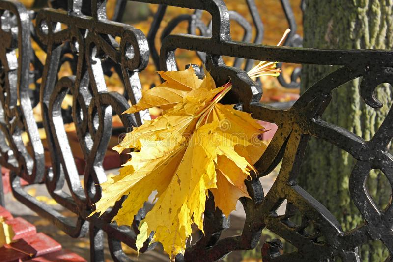 De herfst De herfstbladeren op een bank in het park royalty-vrije stock afbeeldingen