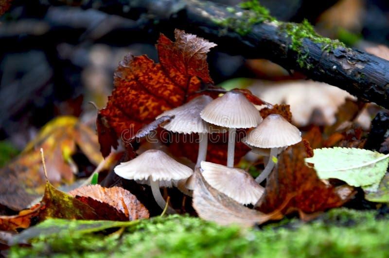 De herfst in het bos in het mos stock afbeelding