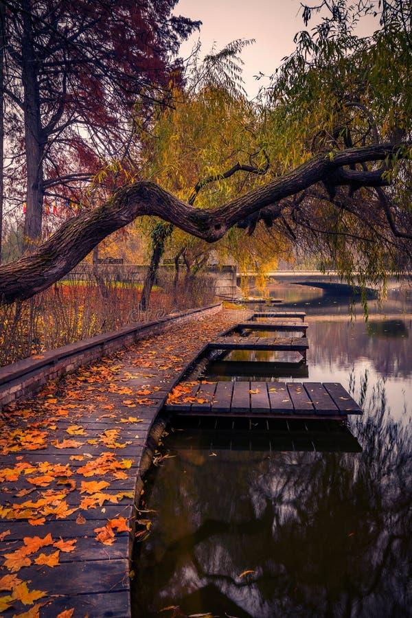 De herfst in het park dichtbij het meer met bladeren ter plaatse stock foto's