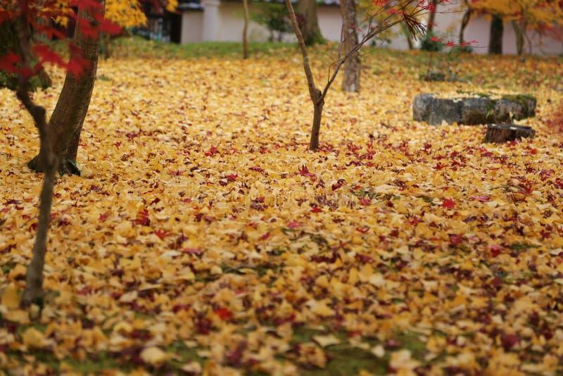 De herfst in het park in Japan stock afbeelding