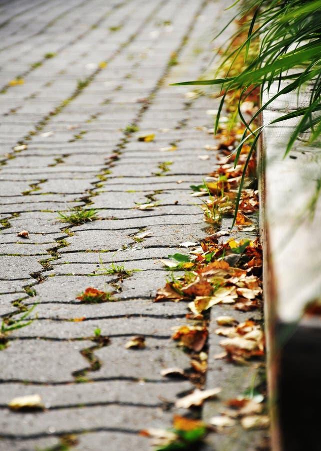 De herfst in het stadspark stock foto's