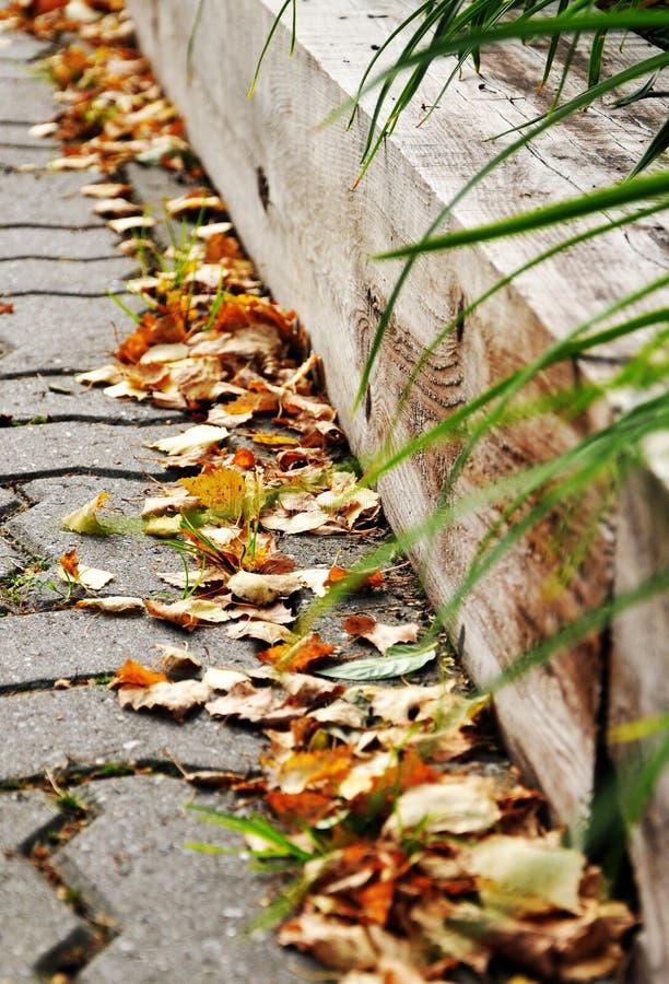 De herfst in het stadspark royalty-vrije stock foto