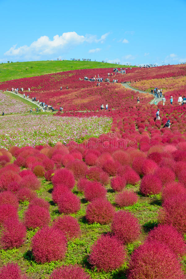 De herfst in Hitachi-Kustpark stock fotografie