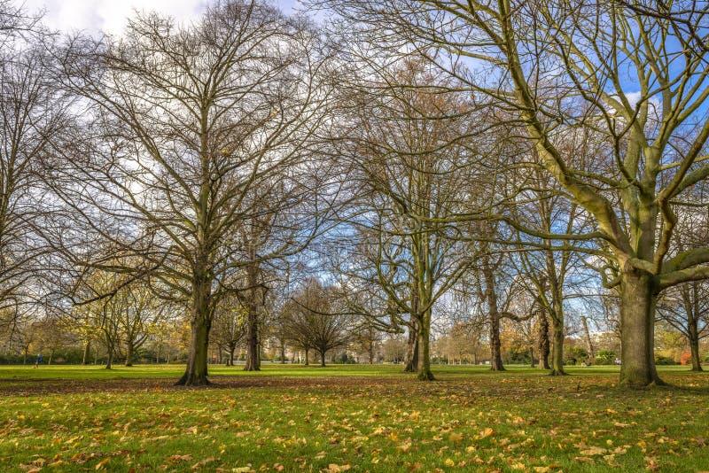 De herfst in Hyde Park, Londen royalty-vrije stock afbeeldingen