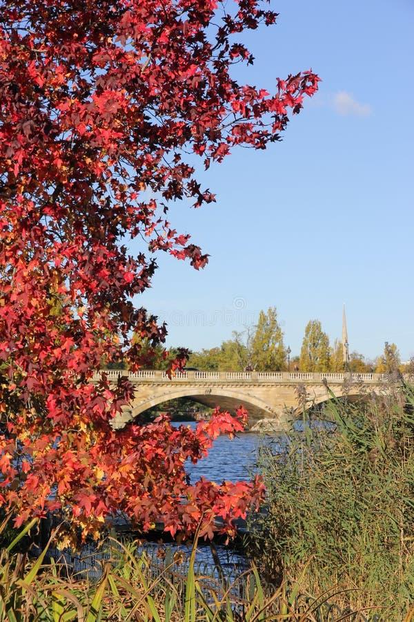 De herfst in Hyde Park, Londen stock afbeeldingen