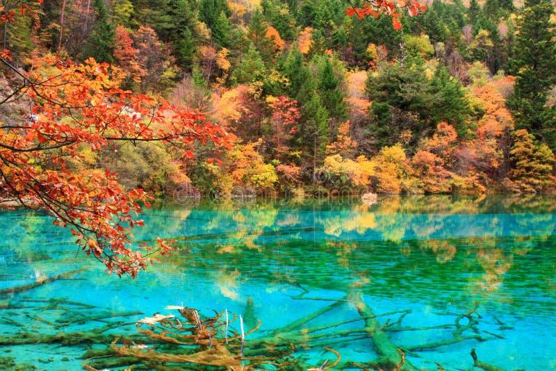 De herfst in Jiuzhaigou, Sichuan, China stock foto