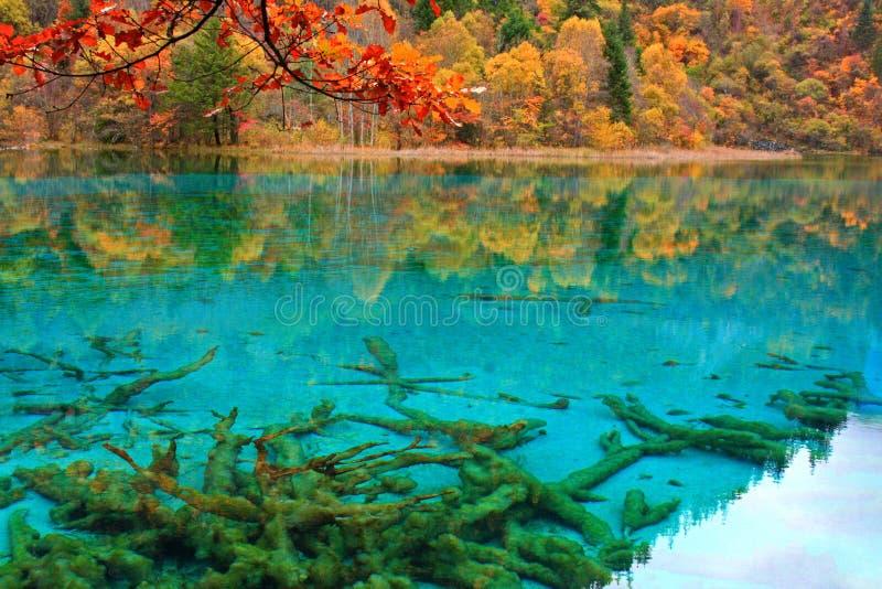 De herfst in Jiuzhaigou, Sichuan, China stock afbeelding