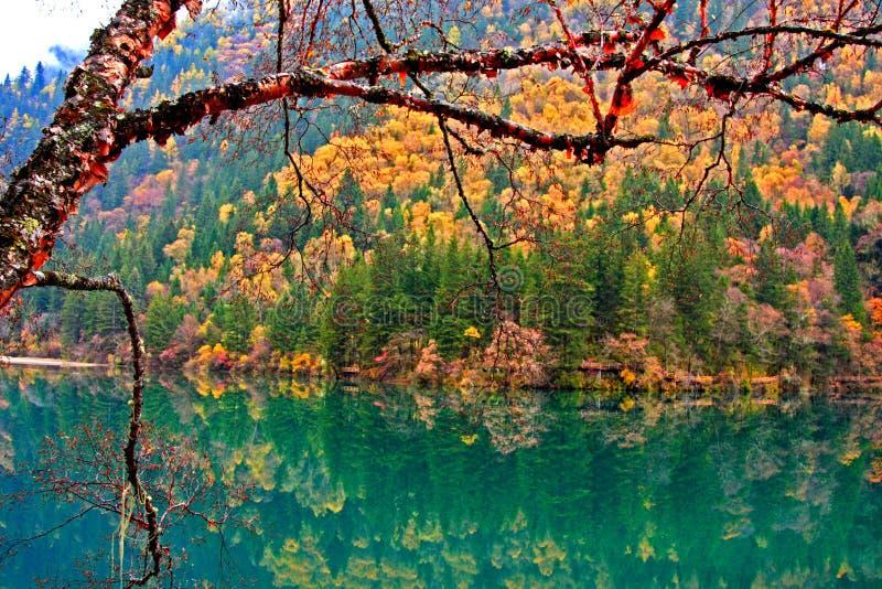 De herfst in Jiuzhaigou, Sichuan, China royalty-vrije stock foto