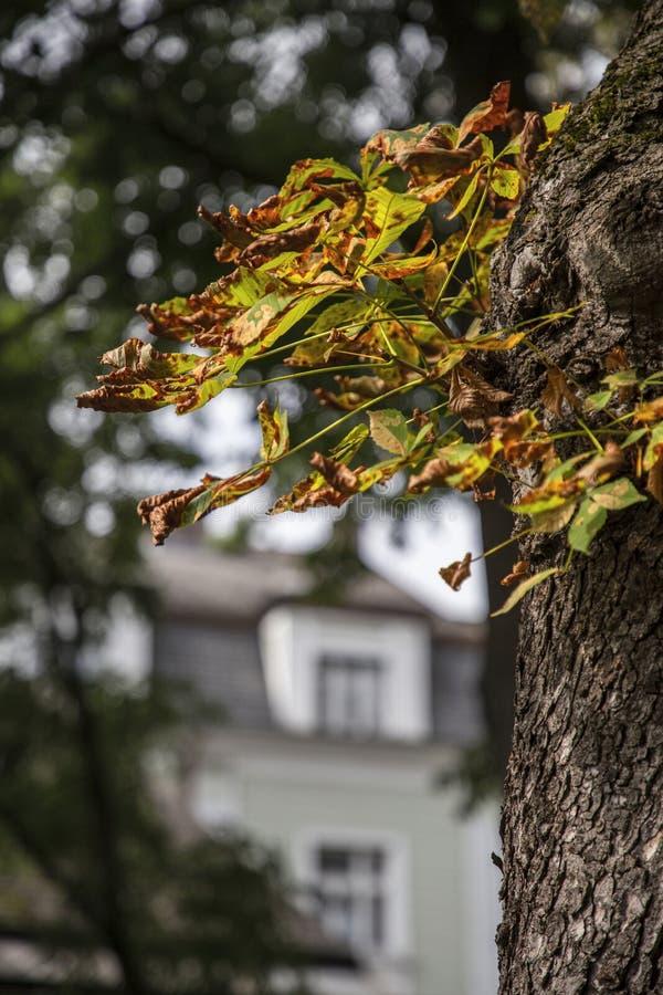De herfst kashtan bladeren op urbanic Parkachtergrond Ondiepe diepte stock foto's