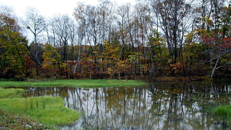 De herfst Klein bosmeer Open strand met gras en bomen op de achtergrond royalty-vrije stock afbeeldingen