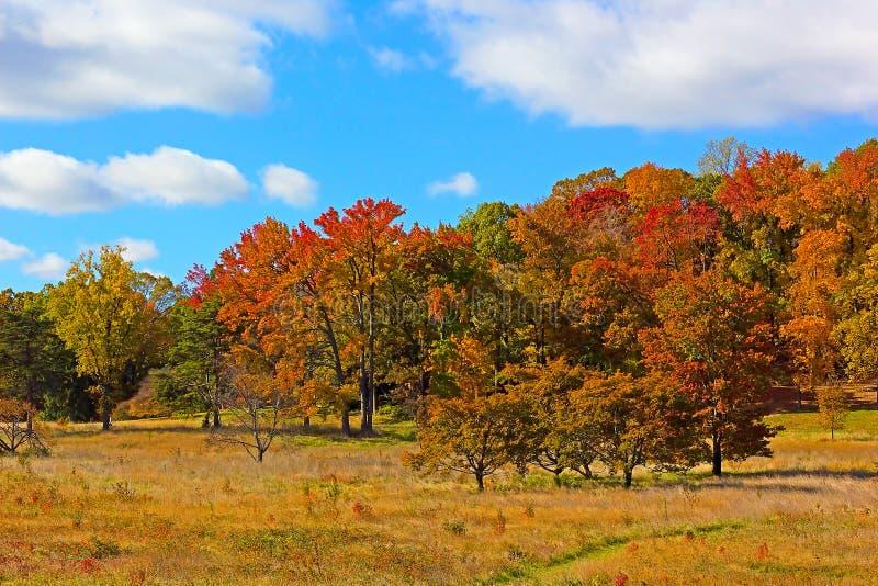 De herfst kleurrijk gebladerte royalty-vrije stock fotografie