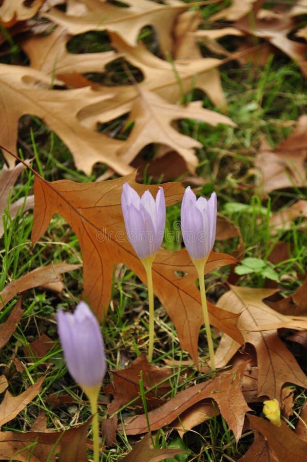 De herfst, kleurrijke bladeren royalty-vrije stock foto's