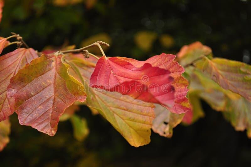 De herfst, kleurrijke bladeren stock afbeeldingen