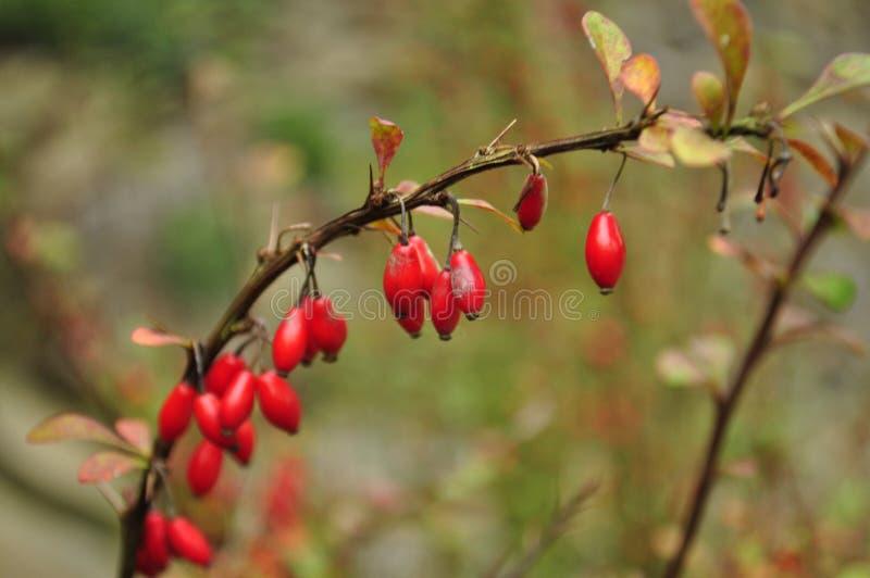 De herfst, kleurrijke bladeren royalty-vrije stock afbeelding