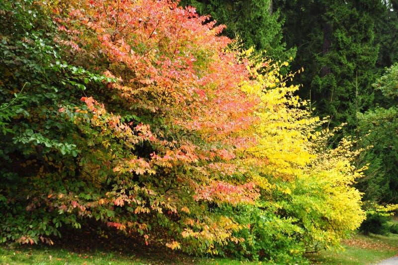 De herfst, kleurrijke bladeren stock foto