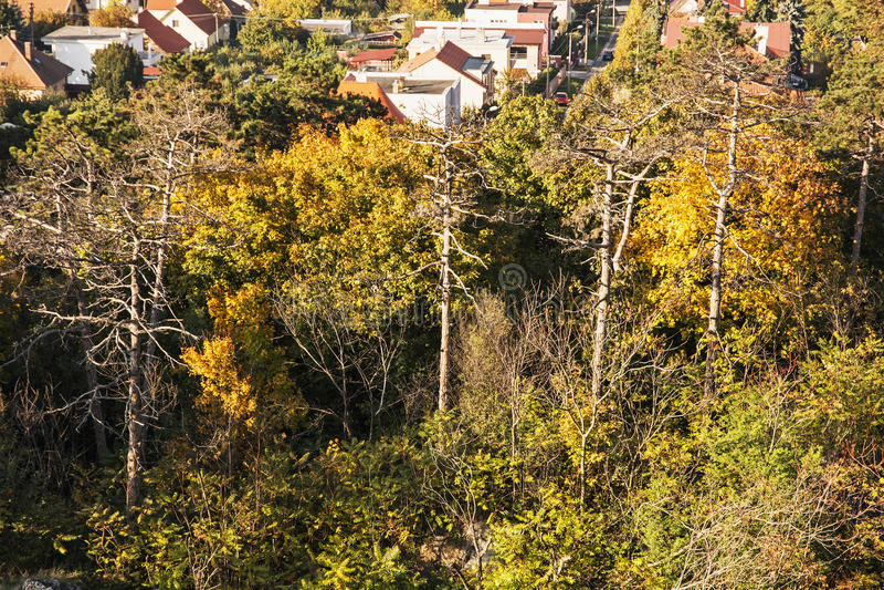 De herfst kleurrijke bomen en familiehuizen stock afbeelding