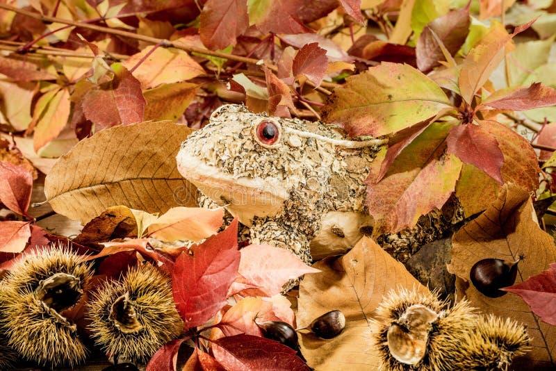 De herfst komt royalty-vrije stock fotografie