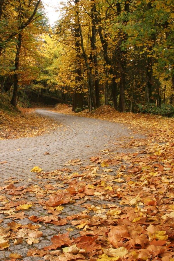 De herfst in Lamego royalty-vrije stock fotografie