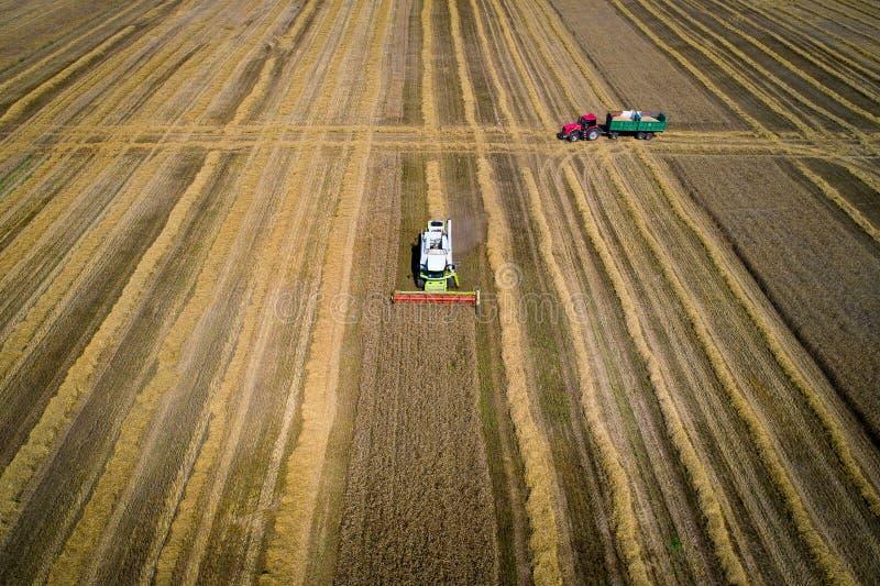 De herfst landbouw het oogsten achtergrond stock afbeeldingen