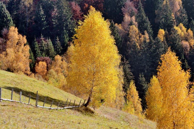 De herfst landelijk landschap royalty-vrije stock afbeelding