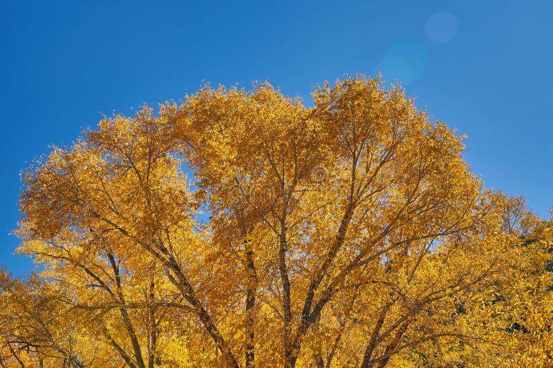 De herfst langs Pas Kebler royalty-vrije stock fotografie