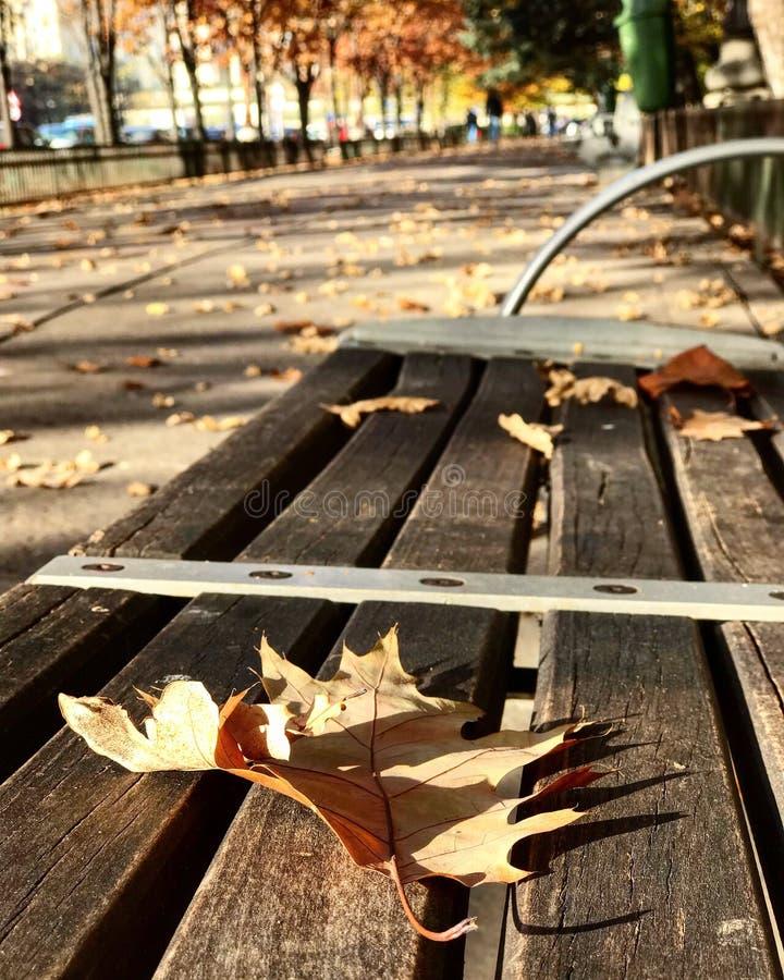 De herfst, leafe, stad royalty-vrije stock foto