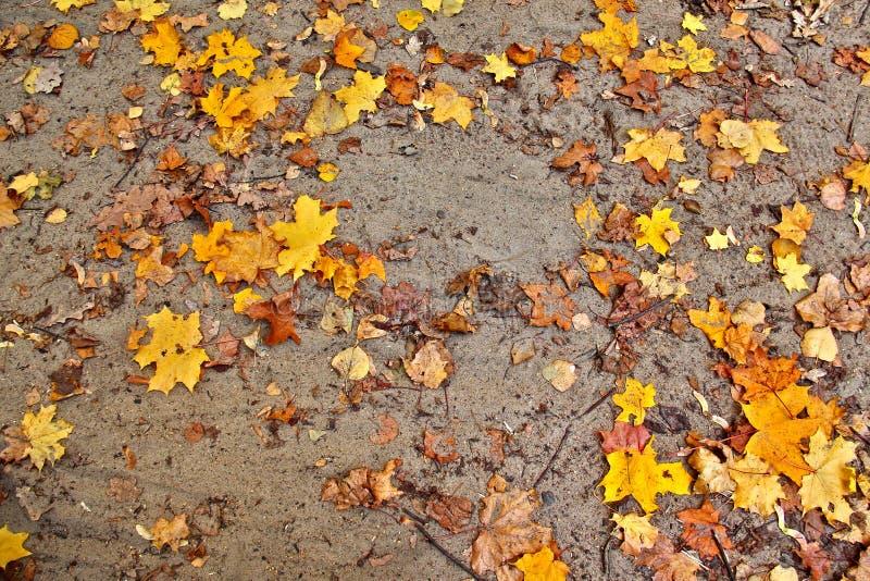 De herfst losse weg met gele bladeren royalty-vrije stock foto's