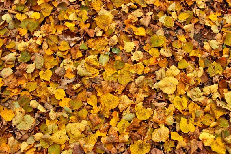 De herfst losse weg met gele bladeren royalty-vrije stock afbeelding