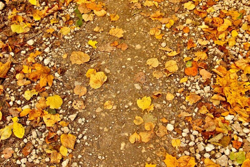 De herfst losse weg met gele bladeren stock afbeeldingen