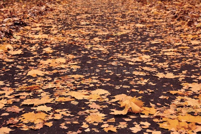 De herfst losse weg met gele bladeren van esdoorn, berk, eik en esp royalty-vrije stock foto's
