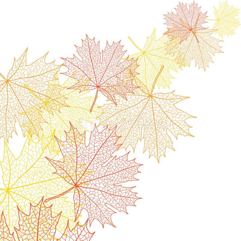 De herfst macroblad van esdoorn Vector bacground stock illustratie
