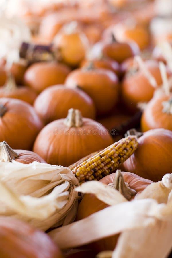 De herfst met pompoenen en graan stock foto