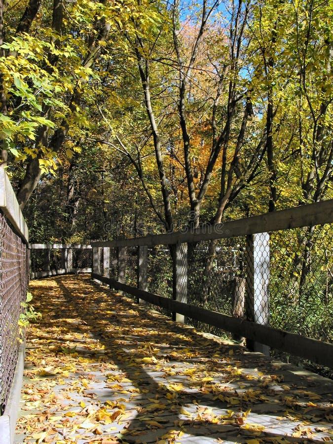De herfst in Michigan stock foto