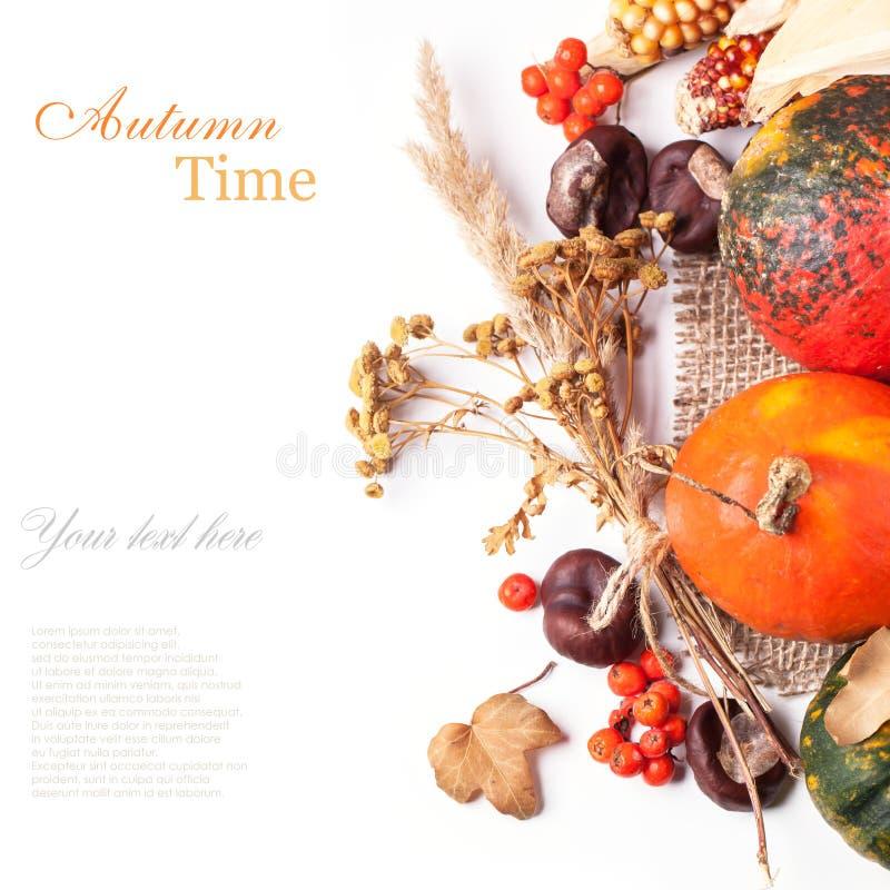 De herfst minipompoenen stock fotografie