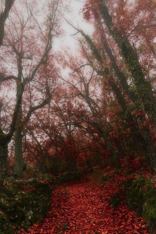 De herfst mistige dag Woestijn Road royalty-vrije stock afbeeldingen