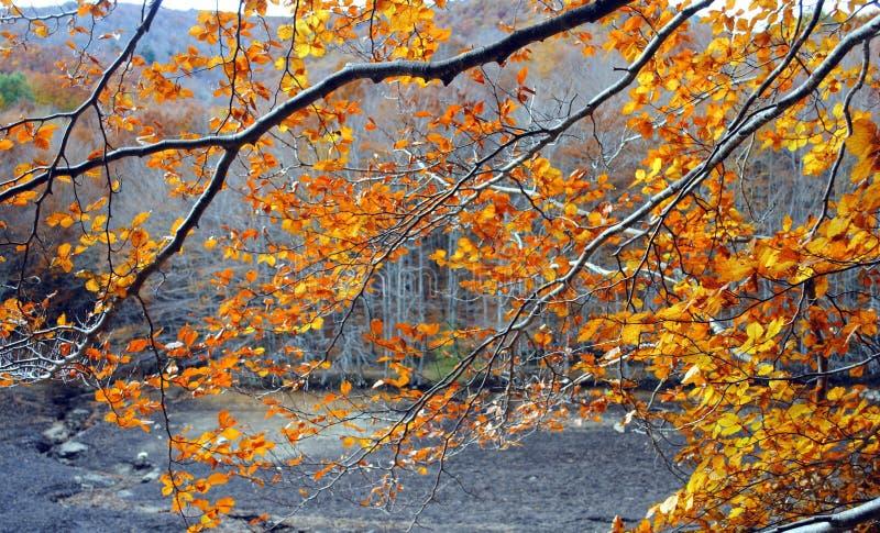 De herfst in Montseny stock fotografie
