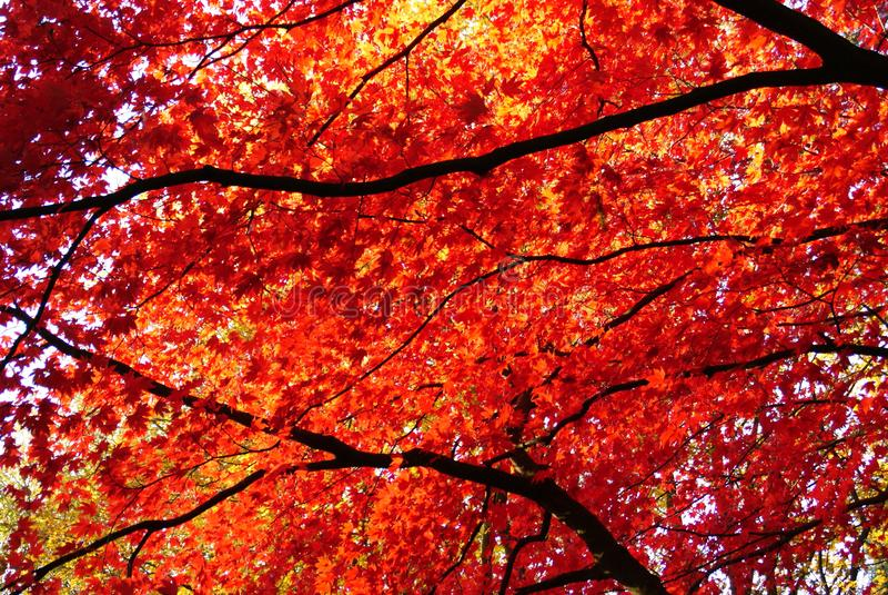 De herfst is mooi royalty-vrije stock afbeeldingen