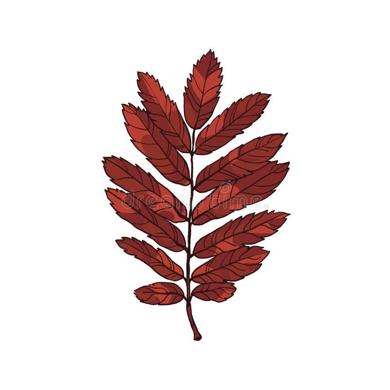 De herfst mooie bladeren van lijsterbes Installatie met vruchten stock illustratie