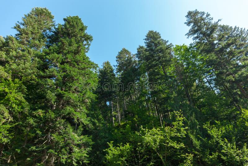 De herfst mooie bosachtergrond Bos groene bomen tegen de hemel royalty-vrije stock fotografie