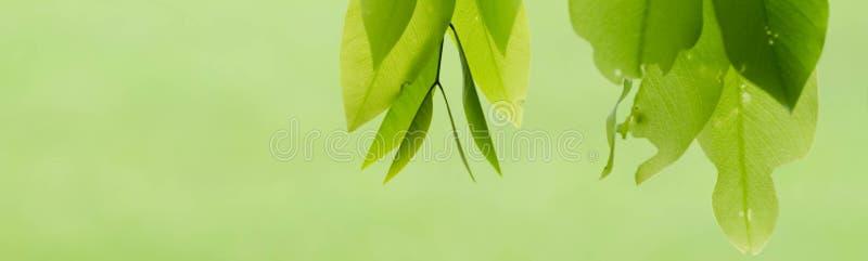 De herfst naadloos patroon stock fotografie
