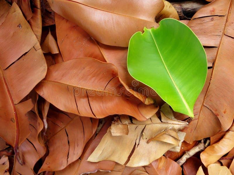 De herfst naadloos patroon stock foto's