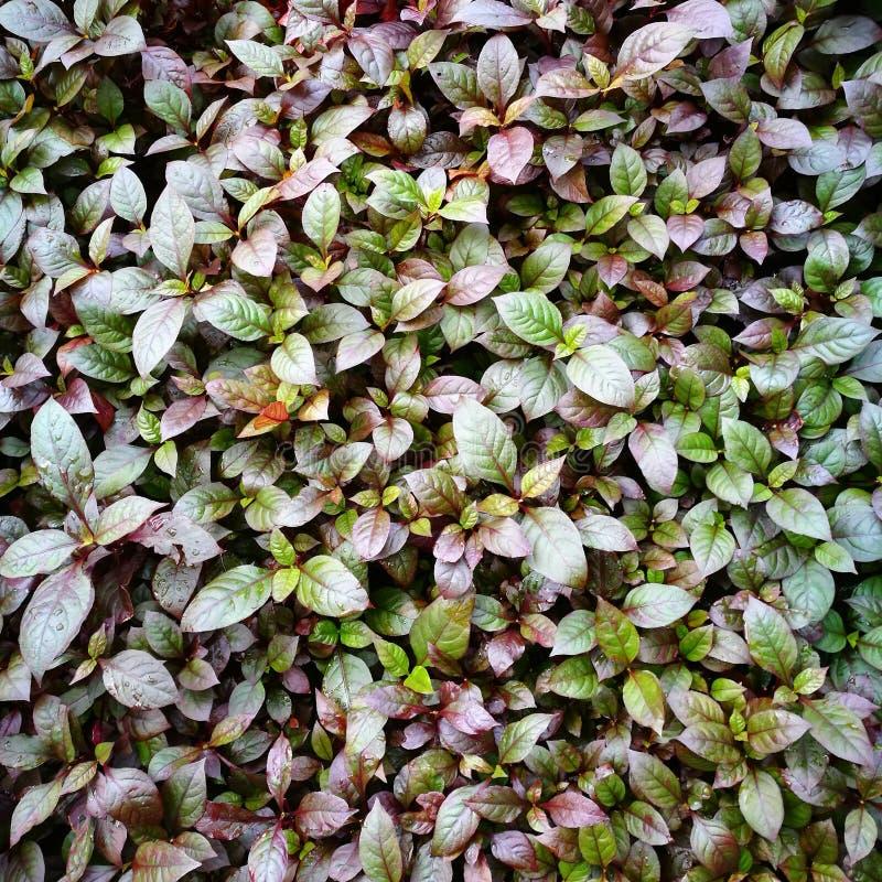 De herfst naadloos patroon royalty-vrije stock fotografie